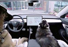 Тесла представил обновление с режимом собаки